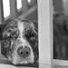 Not Watch Dog by cogdogblog