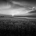 Small photo of Abberton Reservoir Monochrome