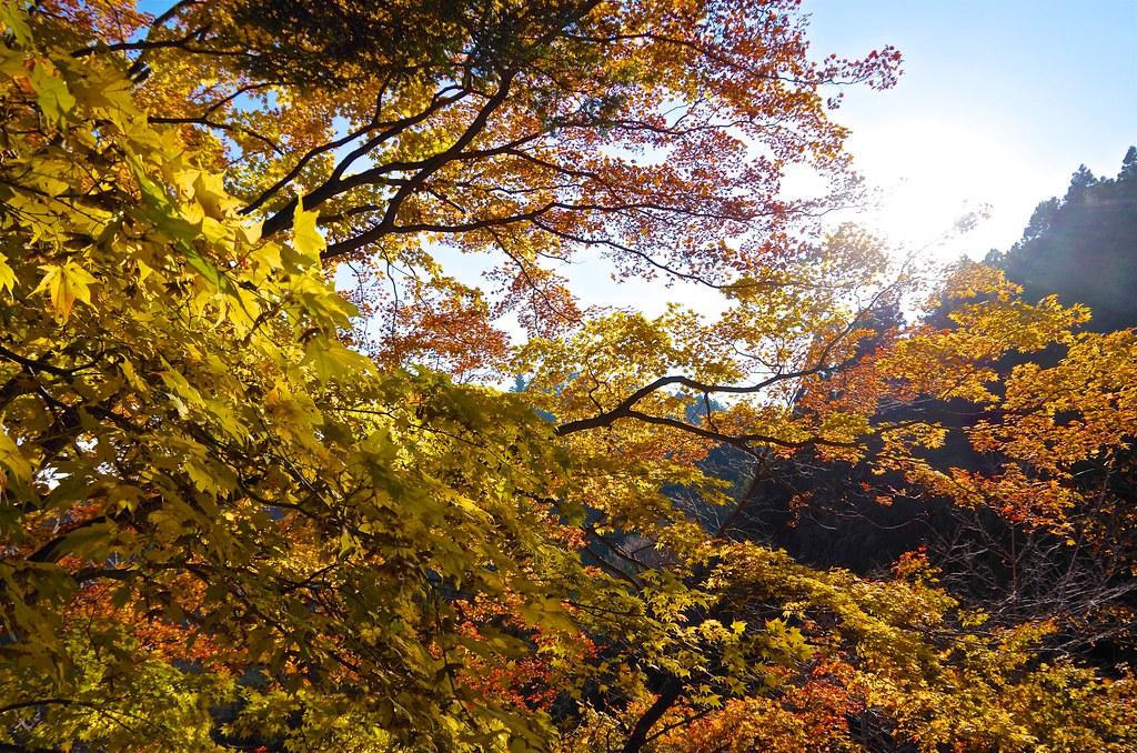 20131123_Mt.Otake 041