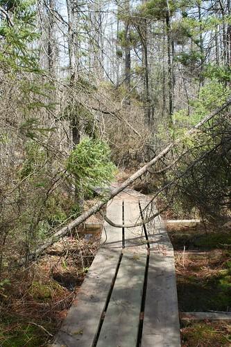 Broardwalk and Black Spruce