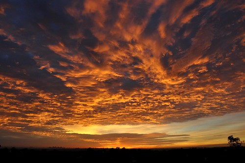 lighting morning light red sky orange nature colors beautiful weather night clouds composition sunrise dark skyscape spectacular landscape fire golden amazing scenery mood colours artistic cloudy horizon perspective sydney creative silhouettes dramatic australia stunning redsky colourful framing dramaticsky fiery lonetree dramaticclouds redsunrise heavyclouds goldensunrise colourtones cloudysunrise nikond90