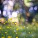 Wiesenblumen by ~janne
