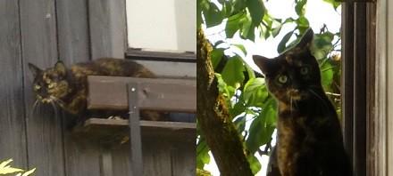gato con cara de enfadado y gato sonriendo sonrisa