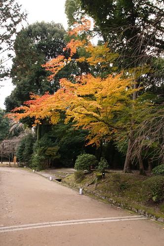 【写真】2012 紅葉 : 醍醐寺/2020-08-07/IMGP6844