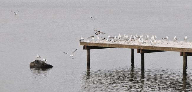 fågelbryggan