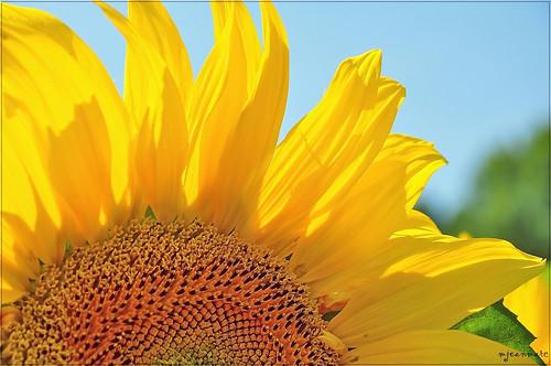 Fleur de Soleil by Excalibur67