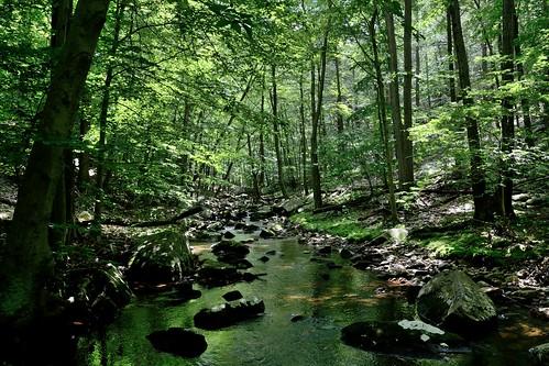 The Tiorati Brook