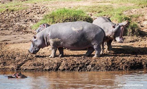 Kenia - Masai Mara 19