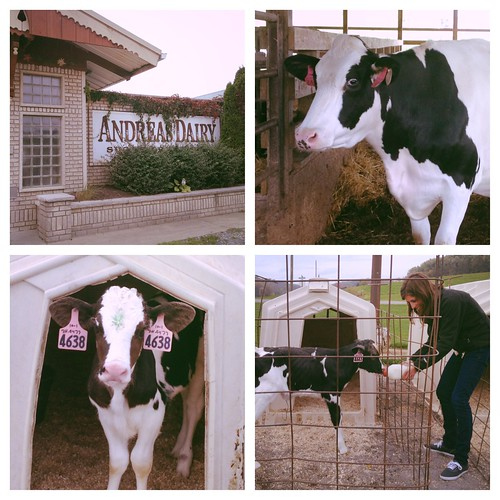 Ohio Dairy Adventure
