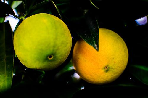 Naranjas 5