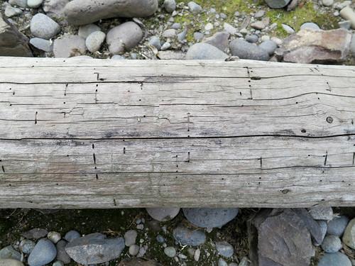 wood texture nature log pattern antarctica southshetlandislands turretpoint