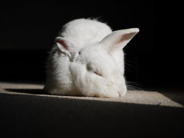 gus sleeping in the sun