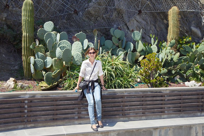 Monterosso cactus