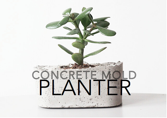 DIY Concrete Mold Planter