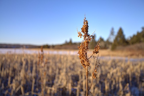 winter canada novascotia dof bokeh ns marsh hdr wetland 2015 transcanadatrail atlanticviewtrail westlawrencetown