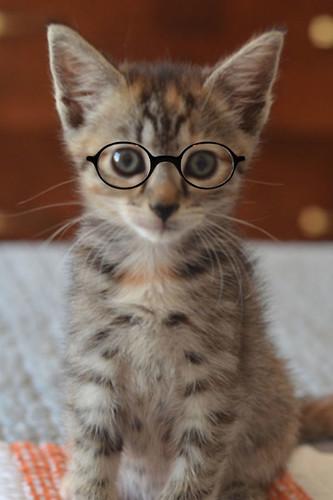Midge_Glasses