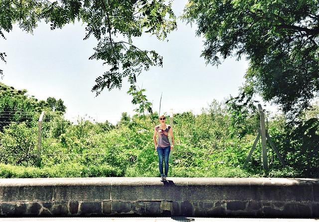 in jurassic park