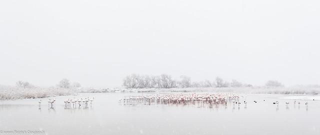 Camargue sous la neige