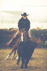 animal sports, rodeo, western riding, equestrian sport, sports, horse, cowboy,