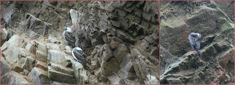 Bird life, Paracas