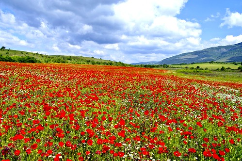 sky plant flower landscape outdoor bulgaria