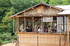 Iwatayama Monkey Park at Arashiyama, Kyoto