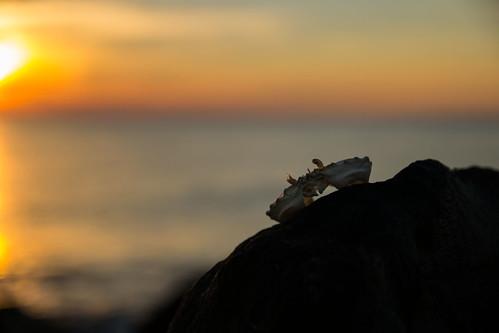 sunset water sunrise nikon rocks sigma delaware heronpoint d3100 outdoorsdelmarva