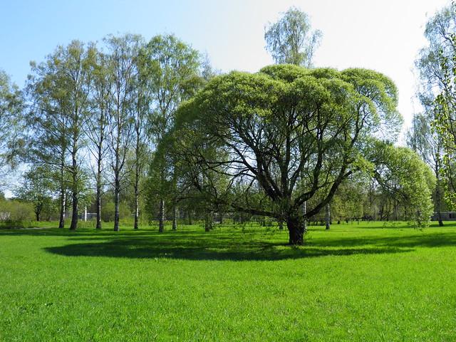 Дерево // Tree