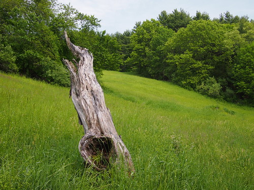 natural sculpture by Rick Payette via I {heart} Rhody