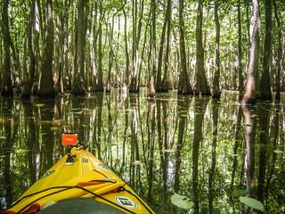 Sparkleberry Swamp (9 of 25)