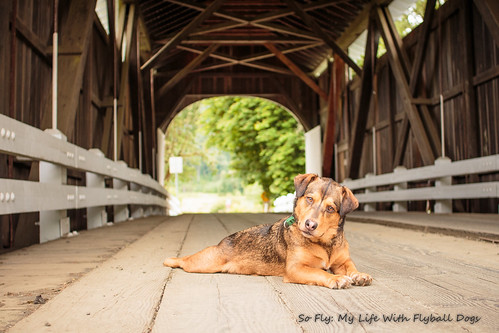 Harris Covered Bridge-4488