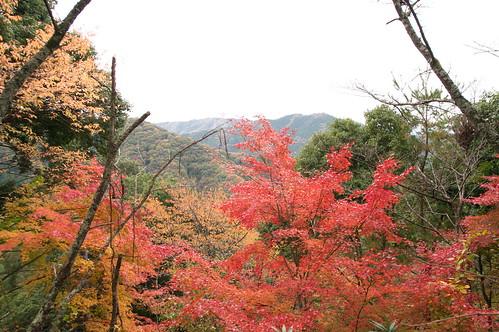【写真】2012 紅葉 : 笠置山もみじ公園/2020-05-28/IMGP6119