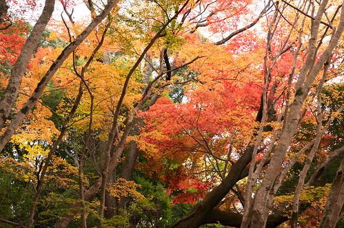 【写真】2012 紅葉 : 笠置山もみじ公園/2020-05-28/IMGP6130