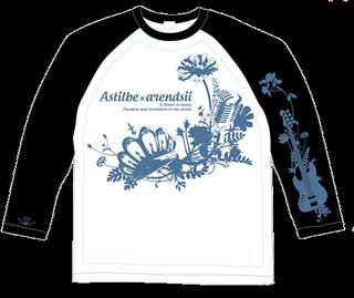 Astilbe-x-arendsiiラグランTシャツ_600