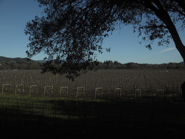 Santa Rosa winery, off season