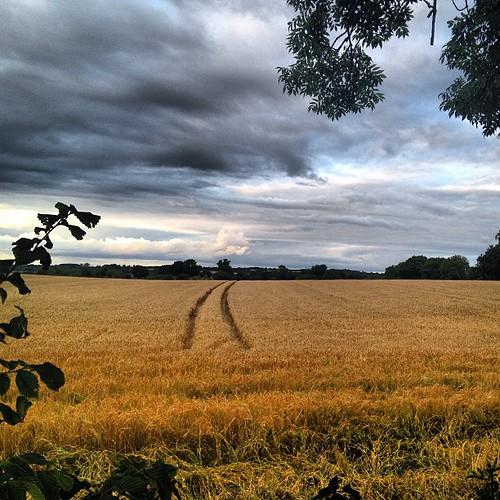 Field of barley. #Meath