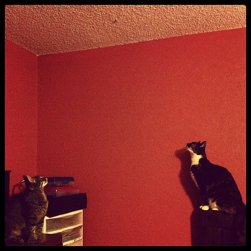 And then, at midnight, all the cats started yelling at a moth on the ceiling.