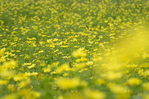 autumn flower highlands sony explore 日本 花 秋 cosmos amount 長野県 sal70300g sony70300g 黒姫高原 コスモス園 slta65v α65 上水内郡