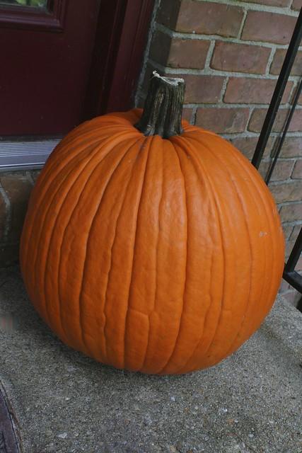 276.365 {Biggest Pumpkin We've Ever Had}