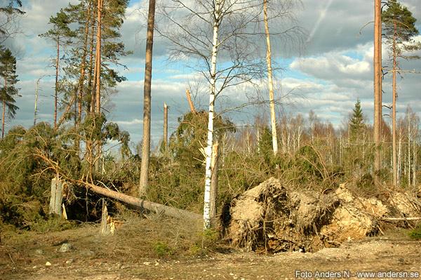 hurricane Gudrun, stormen, orkanen, småland, träd, 2005