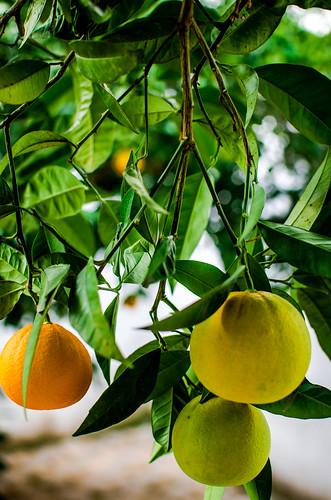 Naranjas 12