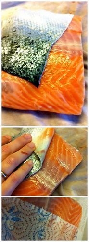salmon vertical