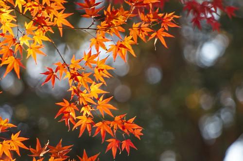 【写真】2013 紅葉 : 上御霊神社/2020-07-01/IMGP4192