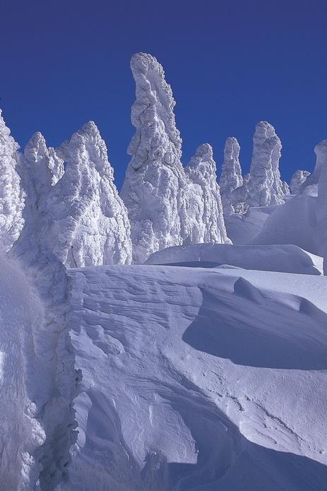 阿仁的樹冰
