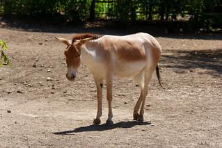Rostov-on-Don Zoo 21