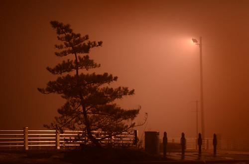 desktop light wallpaper mist tree silhouette misty fog night dark newjersey gloomy background foggy nj dramatic eerie spooky jersey gloom drama murky desktopwallpaper desktopbackground murk unionbeach