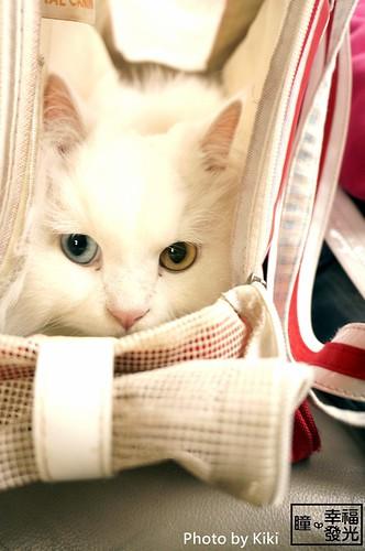 cat_5th (26)