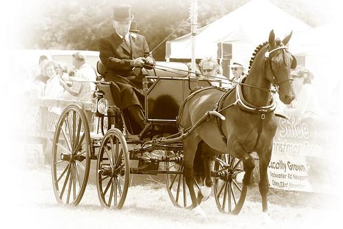 Hackney Horse2