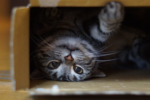 cat #361