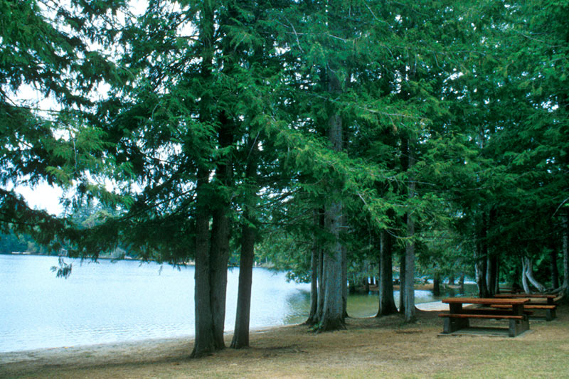 Spider Lake Park, Qualicum Bay, Vancouver Island, British Columbia, Canada